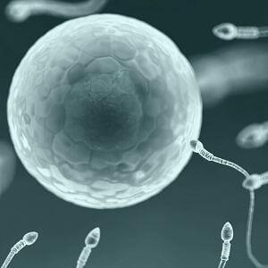 Cura infertilità maschile
